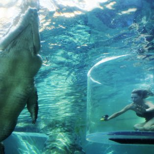 4/4/15 - Είναι αυτή η πιο τολμηρή γυναίκα στον κόσμο; Δεν φοβάται να κολυμπήσει στα ίδια νερά μαζί με έναν τεράστιο κροκόδειλο! Φωτό: REX - Κυρίως Φωτογραφία - Gallery - Video