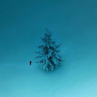 Φωτό ημέρας: Το μοναχικό έλατο στο χιόνι- Ένα συγκλονιστικό κλικ/ Photo: @spathumpa/ instagram - Κυρίως Φωτογραφία - Gallery - Video