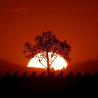 Ο ήλιος δύει σε αμπελώνα του Osthoffen, έξω από το Στρασβούργο - Φωτογραφία: REUTERS / CHRISTIAN HARTMANN - Κυρίως Φωτογραφία - Gallery - Video