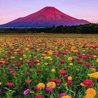 Φώτο ημέρας: Ανοιξιάτικο τοπίο στην μακρινή Ιαπωνία - Μαγεία!/@ohmygod1012 - Κυρίως Φωτογραφία - Gallery - Video