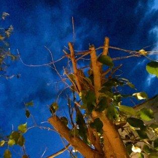 10/04/15: Η φύση στις Σπέτσες μέσα από τον φακό της ζωγράφου Βάσως Τρίγκα - Βλαχάκη! - Κυρίως Φωτογραφία - Gallery - Video