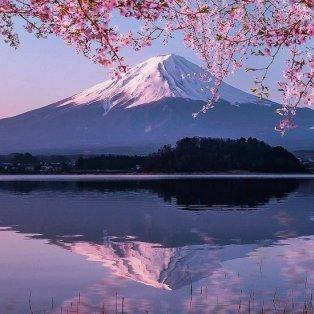 Φώτο ημέρας: Στην Ιαπωνία μια ανθισμένη κερασιά καθρεφτίζεται στα κρυστάλλινα νερά της λίμνης/@number_shiiix - Κυρίως Φωτογραφία - Gallery - Video