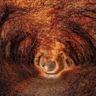 Φωτό ημέρας: Ένα εντυπωσιακότατο τούνελ από δέντρα/ Photo: @arronstruttphotography - @fubiz/instagram - Κυρίως Φωτογραφία - Gallery - Video