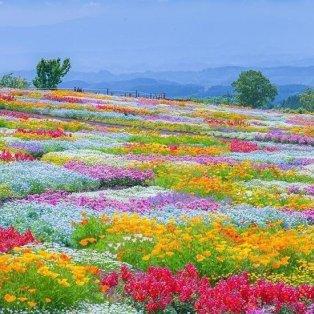 Φώτο ημέρας: Ταξιδεύουμε στο απίθανο Kuju Flower Park της Ιαπωνίας - Γεμάτο λουλούδια!/@fubiz - Κυρίως Φωτογραφία - Gallery - Video