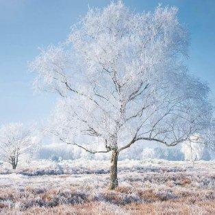 Σας παρουσιάζουμε τη φωτογραφία της ημέρας – Το χιονισμένο τοπίο που σε μαγνητίζει/ Photo: Instagram - @albertdrosphotography - Κυρίως Φωτογραφία - Gallery - Video