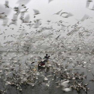 19/12/14: Νέο Δελχί: Άντρες κάνουν βαρκάδα καθώς γλάροι πετούν πάνω από τα νερά του ποταμού Γιαμούνα - Φωτό: Reuters - Ahmad Masud - Κυρίως Φωτογραφία - Gallery - Video