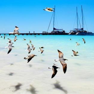 """I believe I can fly..."" όπως αυτά τα πανέμορφα γλαρόπουλα - Φωτογραφία: Instagram / Marina Vernicos - Κυρίως Φωτογραφία - Gallery - Video"