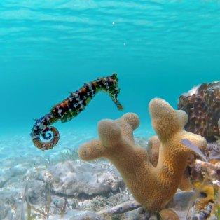 Φωτό ημέρας ο πανέμορφος ιππόκαμπος στις Μπαχάμες /@giannistsou.1  - Κυρίως Φωτογραφία - Gallery - Video