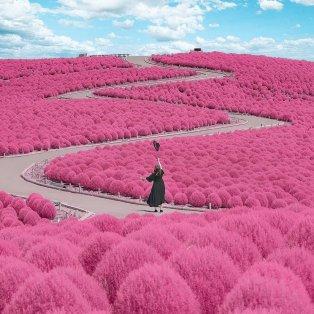 Φωτό ημέρας το φανταστικό ροζ πάρκο - κήπος στην Ιαπωνία - Μαγεία/ @number_shiiix - Κυρίως Φωτογραφία - Gallery - Video
