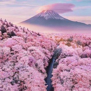 Φωτό ημέρας η Άνοιξη στην Ιαπωνία /@fubiztravel @hobopeeba  - Κυρίως Φωτογραφία - Gallery - Video