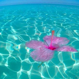Happy Woman's Day! / Φωτό ημέρας από Μπαχάμες /@giannistsou.1  - Κυρίως Φωτογραφία - Gallery - Video