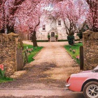 Pink paradise - Ήρθε η Άνοιξη και όλα γέμισαν χρώμα /@kjp - Κυρίως Φωτογραφία - Gallery - Video