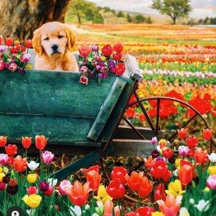 Φωτό ημέρας ο τετράποδος φίλος μας περιτριγυρισμένος από πανέμορφα λουλούδια /@kjp - Κυρίως Φωτογραφία - Gallery - Video