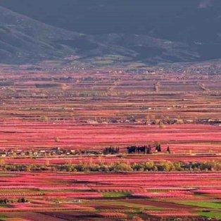 Φώτο ημέρας: Οι θεαματικές ανθισμένες ροδακινιές της Ημαθίας ταξιδεύουν μέσα από το National Geographic/ Αλέξανδρος Μαλαπέτσας  - Κυρίως Φωτογραφία - Gallery - Video