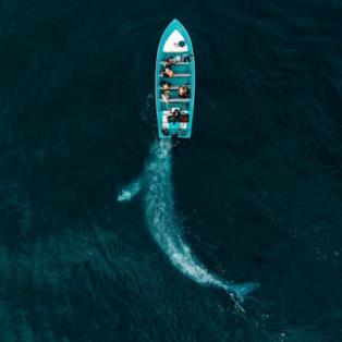 Κορυφαία φωτογραφία του National Geographic 2019: Η φάλαινα σπρώχνει την μικρή βαρκούλα - JOSE G. RUIZ CHEIRES - Κυρίως Φωτογραφία - Gallery - Video