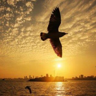 Μαγευτικό κλικ στην ανατολή του ηλίου στις ακτές της Αραβικής Θάλασσας στο Μουμπάι - Φωτογραφία: EPA / DIVYAKANT SOLANKI - Κυρίως Φωτογραφία - Gallery - Video