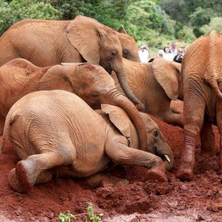 """Και οι """"μεγάλοι"""" έχουν τις τρυφερές στιγμές τους, σαν τα ελεφαντάκια στο εθνικό πάρκο στο Ναϊρόμπι - Φωτογραφία: REUTERS / BAZ RATNER - Κυρίως Φωτογραφία - Gallery - Video"""