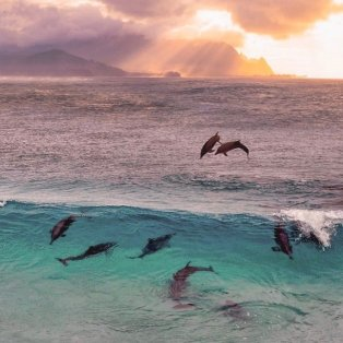 Φωτό ημέρας: Ο χορός των δελφινιών – Ένα σύμβολο ελπίδας/ Photo: Instagram - @nois7 - Κυρίως Φωτογραφία - Gallery - Video