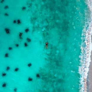 Φωτογραφία ημέρας από την Δυτική Αυστραλία: Έχετε δει ποτέ τόσες πολλές χελώνες να κολυμπούν μαζί σας - Photo: AGORA/SWNS.COM - Κυρίως Φωτογραφία - Gallery - Video