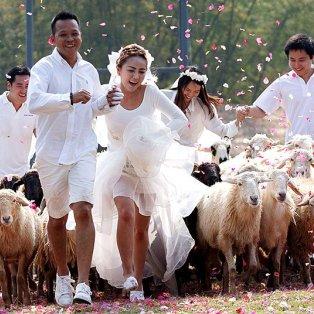 13/02/15: Παρέα με ένα κοπάδι πρόβατα επέλεξαν να παντρευτούν 3 ζευγάρια στην Ταϋλάνδη, ζώντας τον βουκολικό έρωτά τους! Φωτό: YONGRIT/EPA - Κυρίως Φωτογραφία - Gallery - Video