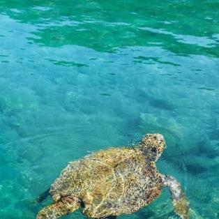 Πανέμορφο Καστελόριζο - Η @katerinakatopis φωτογραφίζει μία χελώνα στα φανταστικά νερά - Κυρίως Φωτογραφία - Gallery - Video