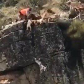 Σκληρές εικόνες που κάνουν τον γύρο του κόσμου: 12 σκυλιά πέφτουν στον γκρεμό κυνηγώντας ελάφι που μαχαιρώνει ο κυνηγός (βίντεο) - Κυρίως Φωτογραφία - Gallery - Video