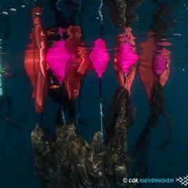 Φανταστικές εικόνες: Δύτες ανασύρουν 2 τόνους δίχτυα - φαντάσματα από την Χαλκιδική - Κυρίως Φωτογραφία - Gallery - Video