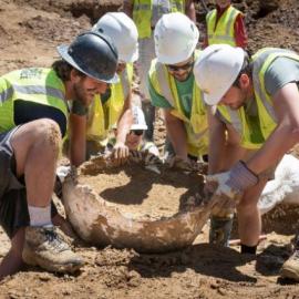 Βίντεο της ημέρας: Ξέθαψαν σπάνιο δεινόσαυρο ηλικίας 68 εκατομμυρίων ετών στο Κολοράντο - Κυρίως Φωτογραφία - Gallery - Video