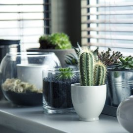 Φυτά εσωτερικού χώρου: Διακόσμησε το σπίτι σου με αυτά & δώσε μια αέρινη αύρα (φωτό) - Κυρίως Φωτογραφία - Gallery - Video