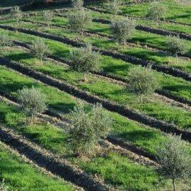 Τα ελληνικά λάδια κατέκτησαν τα πρώτα βραβεία στην παγκόσμια έκθεση Berlin Global Olive Oil Awards 2020 – Πλατινένια & χρυσά για τους ελαιώνες Σακελλαρόπουλου & E-LA-WON - Κυρίως Φωτογραφία - Gallery - Video