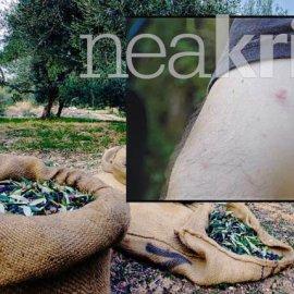 Κρήτη -  Δήμος Μαλεβιζίου: Οι κάτοικοι γέμισαν σπυράκια – Πού οφείλονται τα εξανθήματα σε πόδια, κοιλιά, πλάτη (Φωτό & Βίντεο) - Κυρίως Φωτογραφία - Gallery - Video