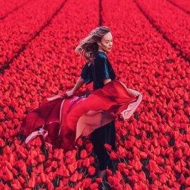 To eirinika υποδέχεται την Άνοιξη με μια συγκλονιστική φωτογραφία - Κόκκινες τουλίπες από την Ολλανδία - Κυρίως Φωτογραφία - Gallery - Video